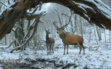 Tregimi hungarez i dashurisë fiton çmimin kryesor në Berlinale