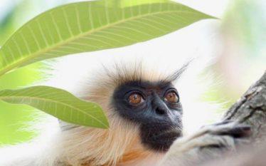 Gati gjysma e specieve të planetit tonë mund të zhduken…