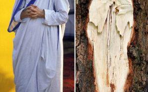 Figura eFigura e Nënës Terezë shfaqet në pemë, habiten banorët…