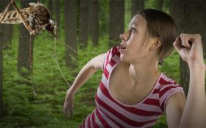 Bie teoria: Mushkonjat nuk pickojnë ata që kanë gjakun e…