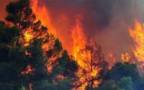 Zjarret në Shqipëri, kjo është situata në 24 orët e…