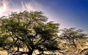 """Misteri i shkencës, """"Pema e Jetës"""" lulëzon në mes të…"""
