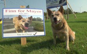 Ndodh edhe kjo: Qeni kandidohet për kryetar komune! (Video)