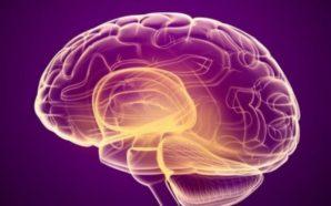 Ushqimi më i mirë për trurin sipas shkencës