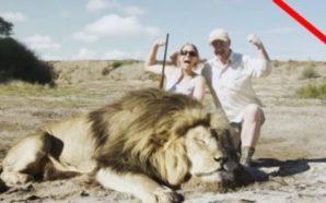 E pabesueshme: Gjuetarët bëjnë foto me luanin e vdekur, por…