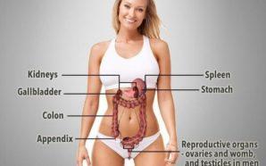 7 organet pa të cilat mund të jetojmë në mënyrën…