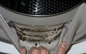 Si të heqim erën e mykut nga lavatriçja?